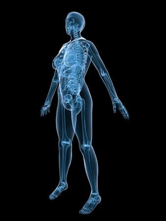 엑스선 해부학 - 여성 해골 - 앞면
