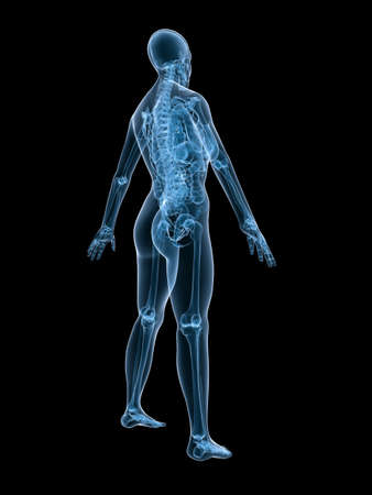 X-ray Anatomy - Female Skeleton - Back Side Stock Photo, Picture And ...