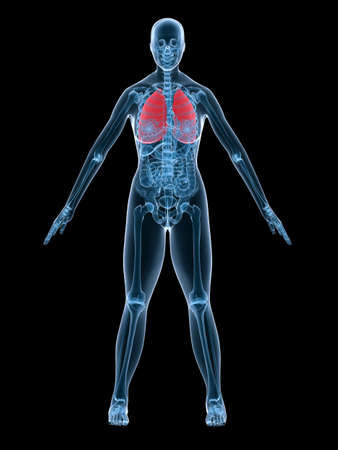 x-ray anatomy - highlighted lung Stock Photo - 2846199