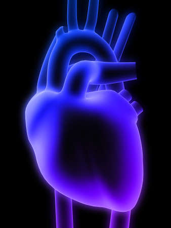 aortic valve: 3d heart