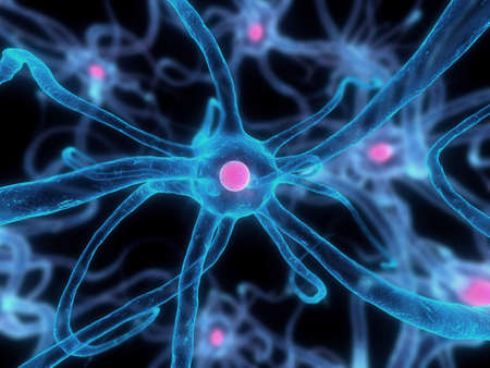 nerv cell