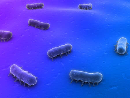 schyzomycete: salmonella Stock Photo