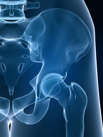 skeletal hip anatomy Stock Photo - 2867110