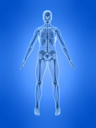 chest x ray: scheletro umano - vista frontale