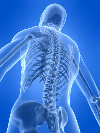 ilium: human skeletal back Stock Photo