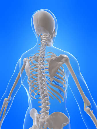 chest x ray: human skeleton - back view Stock Photo