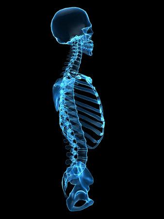 backbone: x-ray torso - side view
