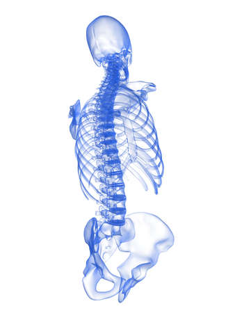 ilium: x-ray torso - back view