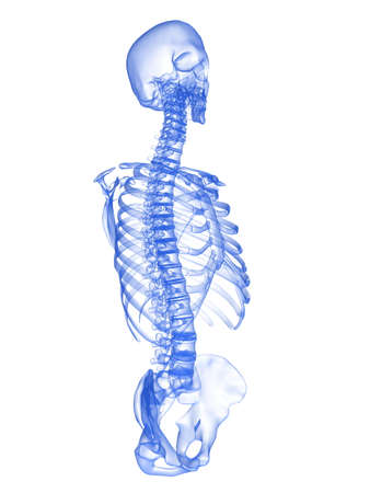 x-ray torso - side view Stock Photo - 2891062