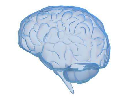 human brain Stock Photo - 2883463