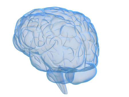 transparent brain Stock Photo - 2883483