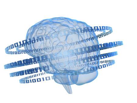 binary and brain Stock Photo - 2883510
