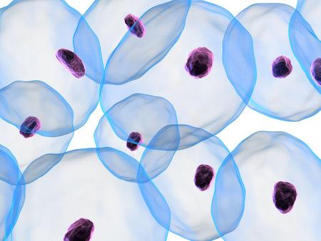 celulas: las c�lulas con n�cleo  Foto de archivo