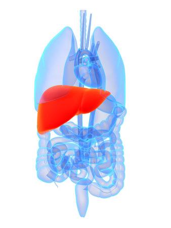 lungcancer: highlighted liver