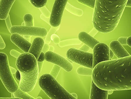 bacteria microscope: bacteria