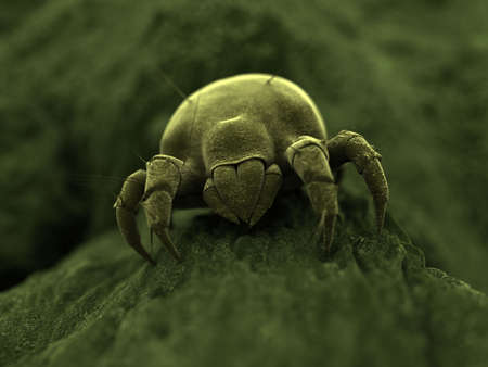 isolated dust mite