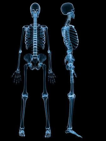 chest xray: human skeleton Stock Photo