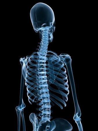 esqueleto humano: esqueleto humano