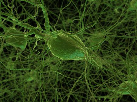 cellule nervose: cellule nervose