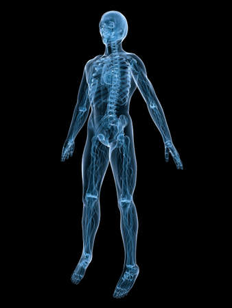 vascular system Stock Photo - 3200869