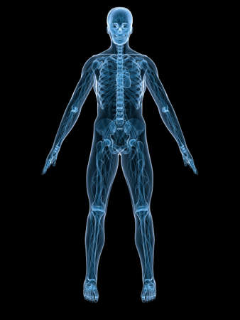 vascular system Stock Photo - 3200867