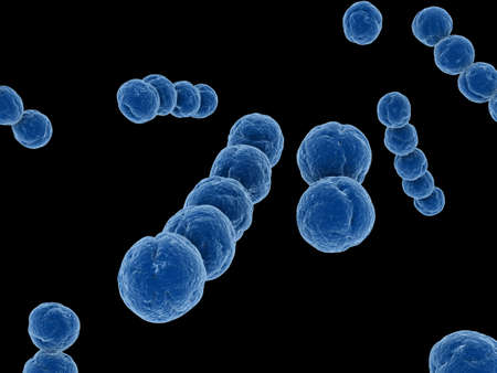 bacteria: streptococcus Stock Photo