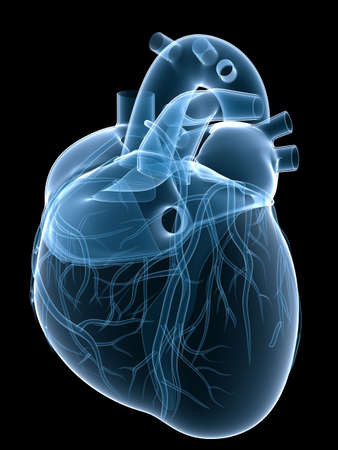 x-ray heart Stock Photo