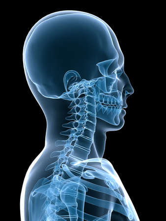 ilium: x-ray skeletal neck