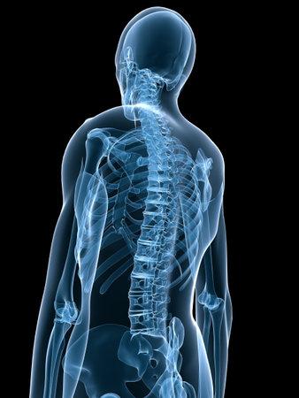chest xray: x-ray human skeleton