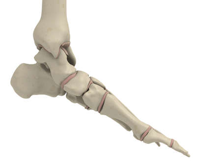 at ankle: skeletal foot Stock Photo