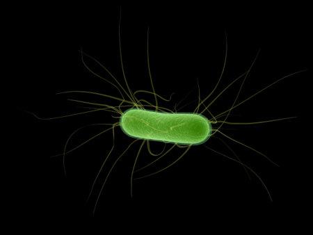 e.coli bacterium Stock Photo - 3200798