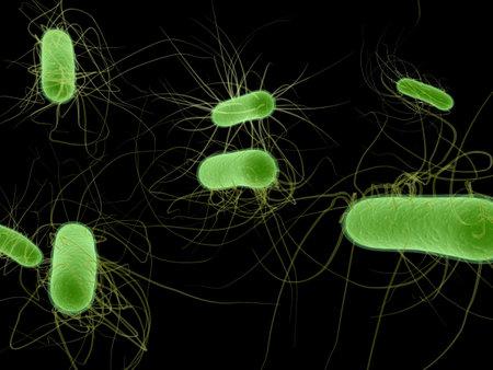 e.coli bacteria Stock Photo - 3200825