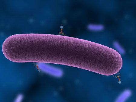 attacking: bacteri�fago atacar a las bacterias