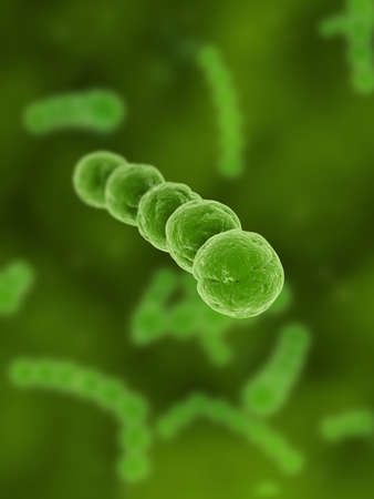 bacillus: streptococcus Stock Photo