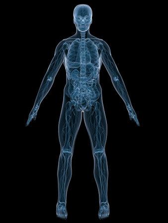 liver cancer: human anatomy Stock Photo