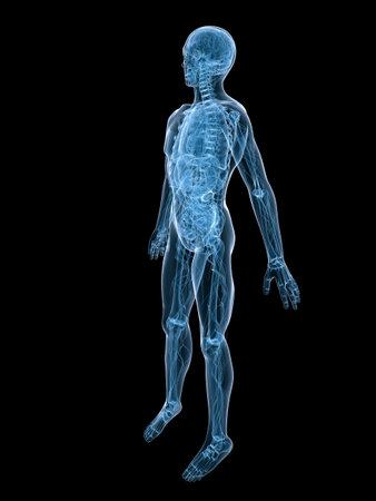 viscera: human anatomy Stock Photo