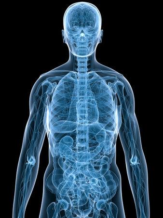 anatomy bowel: human anatomy Stock Photo