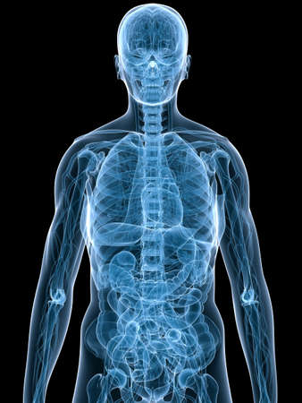 anatomie mens: menselijke anatomie Stockfoto