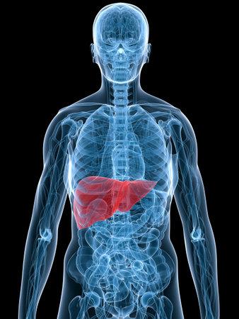 bowel disease: destac� el h�gado  Foto de archivo