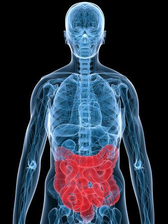 viscera: highlighted colon