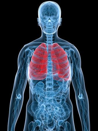 gastrointestinal: destac� pulm�n  Foto de archivo