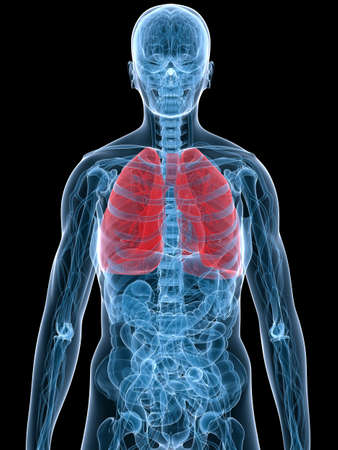 highlighted lung Stock Photo - 3226250