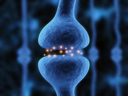 nerves: activa del receptor