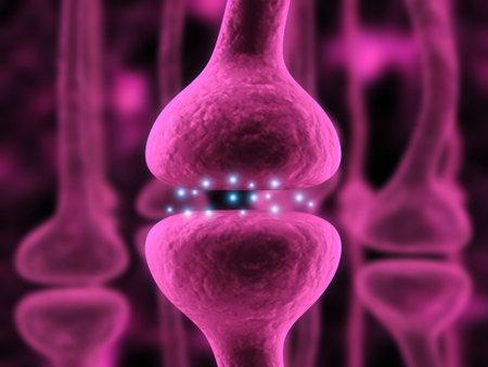 synapse: active receptor