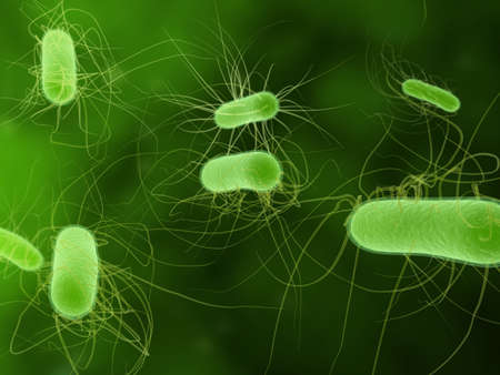 e  coli: e. coli bacteria