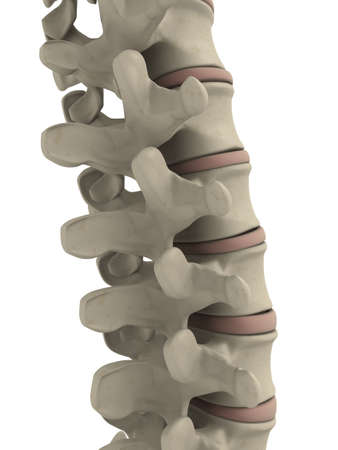 columna vertebral humana: parte de una columna vertebral humana