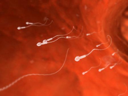 semen: human sperm