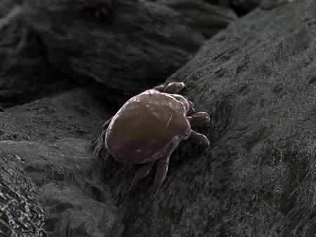 bug's: dust mite