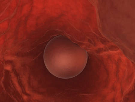 orgasm: human egg cell