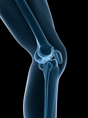 skeletal: skeletal knee Stock Photo